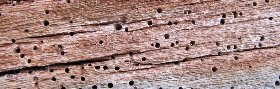 Charlotte termite control
