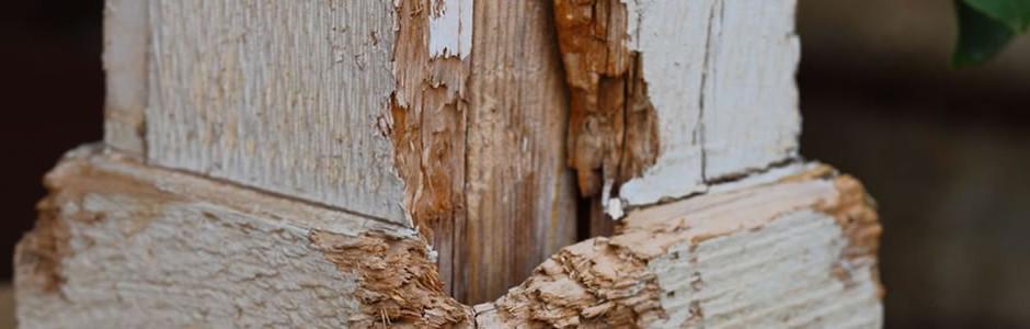 Charlotte termite damage